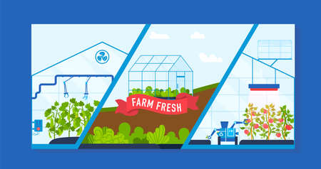 Farm agriculture greenhouse vector illustration, cartoon ripe red tomatoes, green cucumbers growing in modern farmers glasshouse