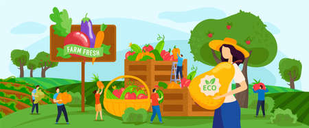 Harvesting fruits vegetables vector illustration, cartoon flat tiny farmer people working on farmland garden, holding pear harvest
