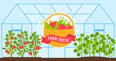 Vegetables grow in farm greenhouse vector illustration, cartoon flat fresh harvest of tomatoes and cucumbers growing in glasshouse