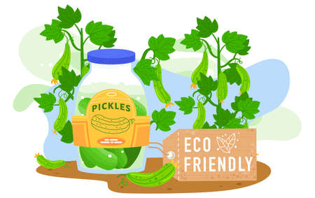 Pickles food vector illustration, cartoon flat pickled cucumbers in jar with fresh green cucumbers branches of agriculture harvest 版權商用圖片 - 158404221