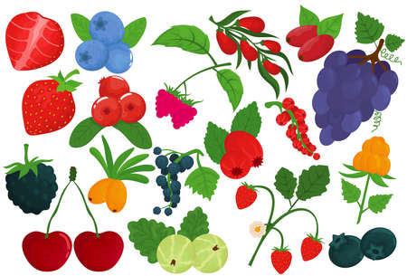 Berry set, isolated on white, vector illustration. Healthy fruit, fresh raspberry, strawberry food, organic cherry and natural blackberry.