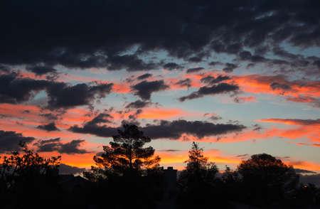 Desert Sunset Over the Trees