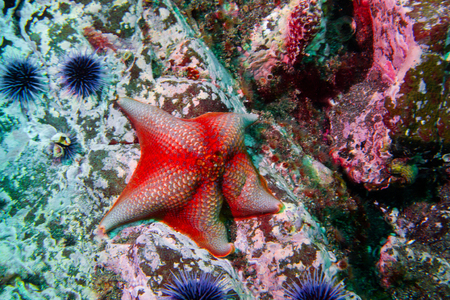 Underwater Close Up of Starfish on Coral Reef