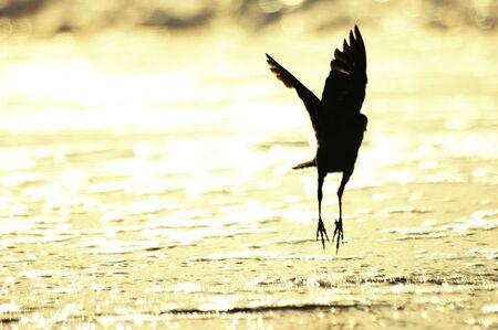 myrtle beach: Myrtle Beach with Sea Bird