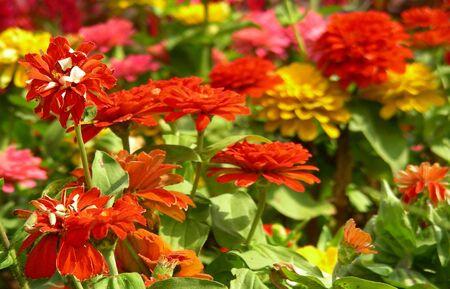 catchy: Garden Flowers