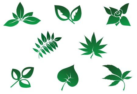 Set of leaves icon isolated on white Vektorové ilustrace
