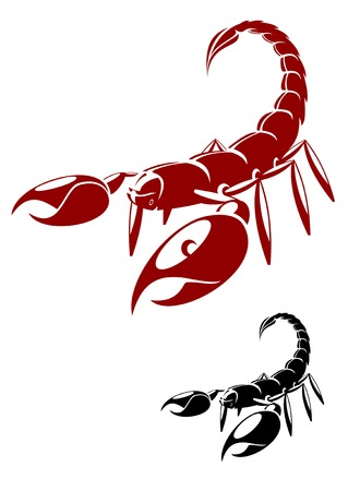 Isolated scorpion in danger pose isolated on white Vector