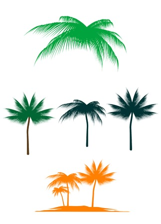 frond: Set of palm trees for design isolated on white