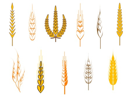 Ripe wheat ears as an agriculture concept Vector