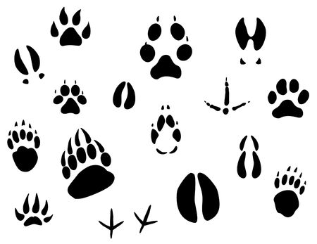 bear silhouette: Insieme delle orme degli animali per la progettazione di ecologia  Vettoriali