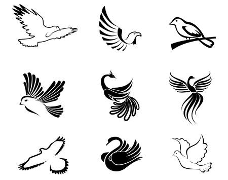 paloma caricatura: Conjunto de s�mbolos de aves como un concepto de la paz