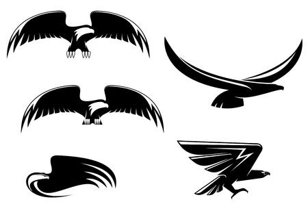 silhouette aquila: Simboli di Aquila araldica e tatuaggio isolata on white