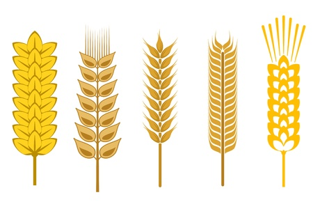 rye: Cereal seeds and symbols isolated on white Illustration