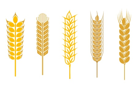 Cereal seeds and symbols isolated on white Vector