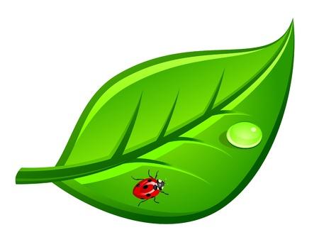 leaf water drop: Ladybug on green leaf for environment design