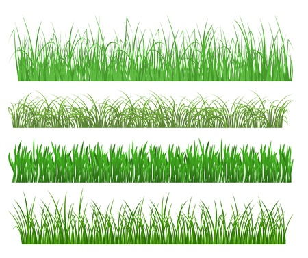 Green grass and plant elements isolated on white background Vector