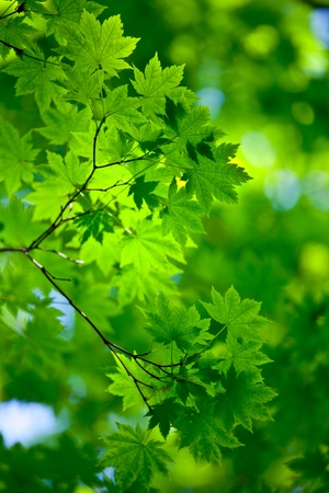 Fresh and pure spring background with green trees Stock Photo - 11489869