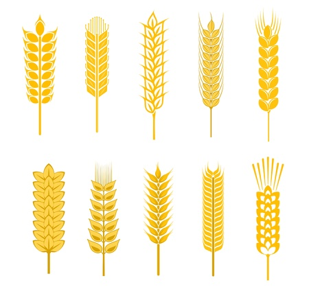 yellow agriculture: Set of cereal symbols for agriculture design isolated on white background