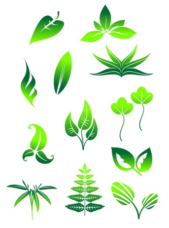 Set of bright green leaves icons and symbols isolated on white background