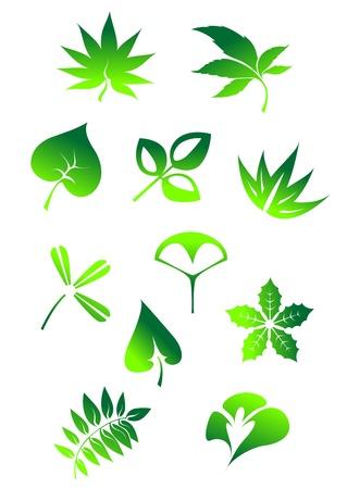 Set of green leaves icons and symbols isolated on white background Illustration