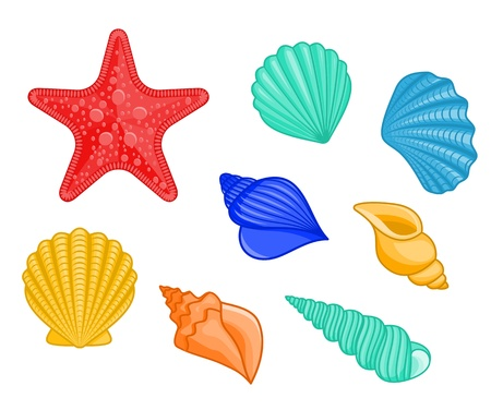 Set of seashells and star for underwater design Vector
