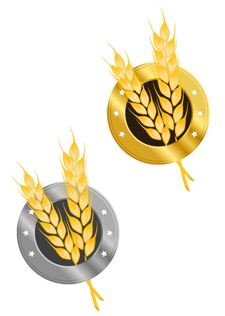 wheat isolated: Wheat ear in frame for agriculture design Illustration