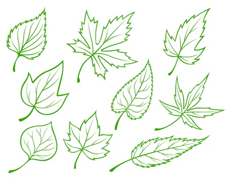 Set of green leaves silhouettes isolated on white background