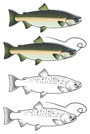 trucha: Chum salmón en el color y w  b versiones para el diseño de la pesca