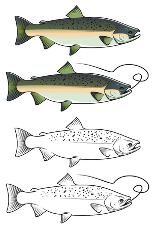 Chum salmon fish in color and w/b versions for fishing design Vector