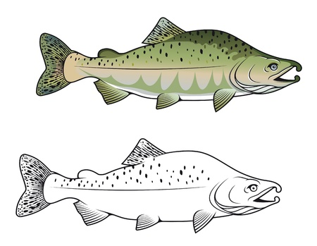 fish scales: Hunchback salmon fish in color and monochrome versions