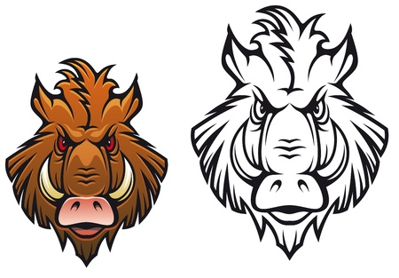 wild hair: Head of angry boar for sports mascot design in color and black variations
