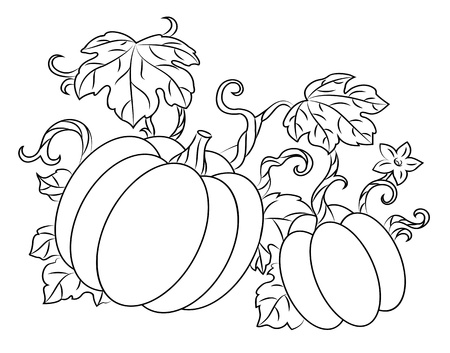 Pumpkin harvest drawing in retro style for thanksgiving design Stock Vector - 14833013