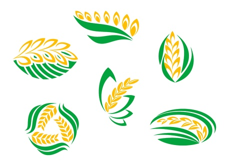 grain fields: Symbols of cereal plants for agriculture design Illustration