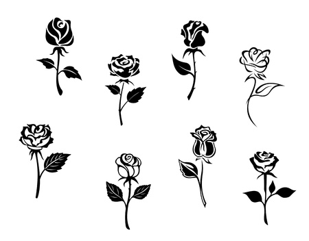 a bud: Rose flowers set isolated on white background for design and embellishments Illustration