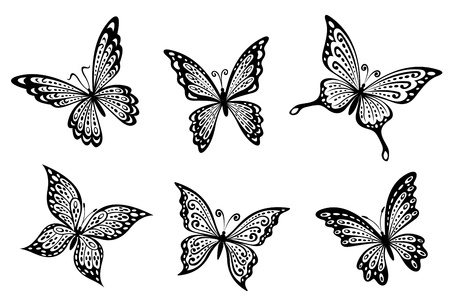 Beautiful butterflies insects isolated on white background Stock Vector - 15677029