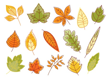 Autumnal colorful leaves set isolated on white background for seasonal design Stock Vector - 16905382