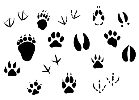 animal foot: Animal footprints and tracks isolated on white for wildlife concept design
