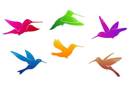 Beija-flores símbolos estabelecidos com plumagem cor isolado no fundo branco Ilustração