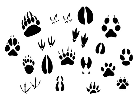huellas de animales: Animales - aves y mamíferos - siluetas huellas conjunto aislado sobre fondo blanco Vectores