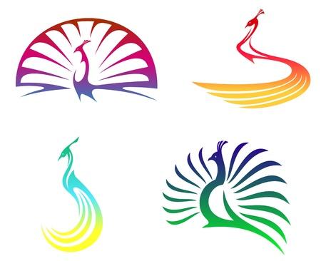 plumas de pavo real: Peacock aves con plumas de colores aislados en el blanco para mascota o cualquier otro diseño Vectores
