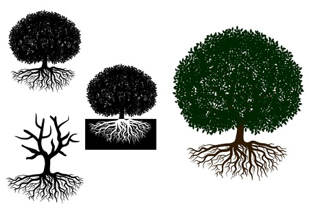 Big tree with roots for any nature or ecology design Vector
