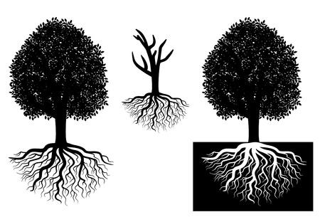 arboles blanco y negro: Árbol aislado con raíces de conceptos de ecología