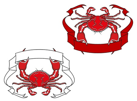 cangrejo caricatura: Cangrejo rojo con la cinta en las garras de la mascota o emblema de dise�o