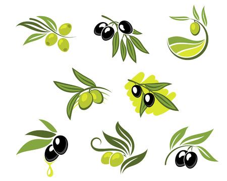 hoja de olivo: Aceitunas verdes y negro establecer para la agricultura o la comida de dise�o