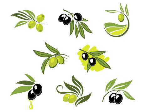 olive branch: Green and black olives set for agriculture or food design
