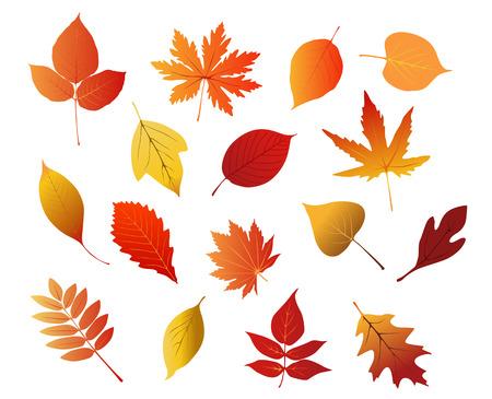 hojas parra: Hojas rojas, amarillas y marrones otoñales aislados sobre fondo blanco para el diseño de la temporada Vectores
