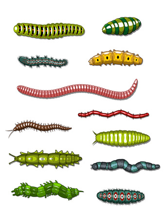 cartoon larva: Caterpillars and worms set isolated on white  Illustration