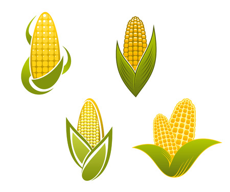 elote: Iconos del maíz amarillo y símbolos para el diseño agricultura Vectores
