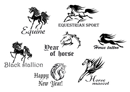 arabian horse: Black stallions and mustangs for equestrian sports or another design