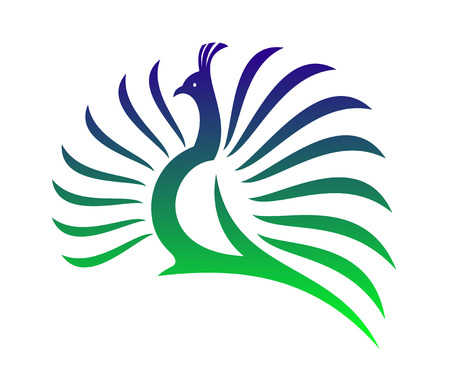 pheasant: Beautiful stylised vector peacock  with its tail feathers opened in a mating display in shades of green and blue on a white background